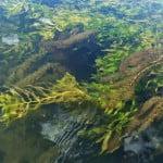 stream flows