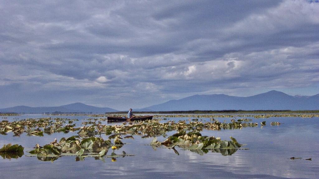 Canoeing among the Wocus on Agency Lake, Oregon