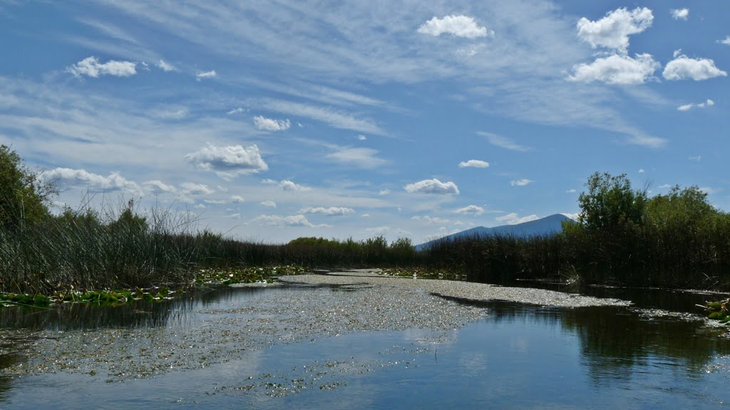 Canoe trail through the marsh of the Upper Klamath Wildlife Refuge, out from Rocky Point, Oregon