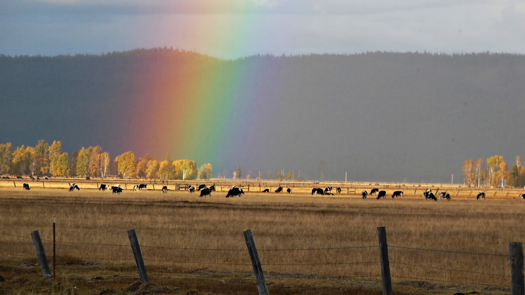 A rainbow ends in a pot of golden aspen trees along Seven Mile Rd in the fall.