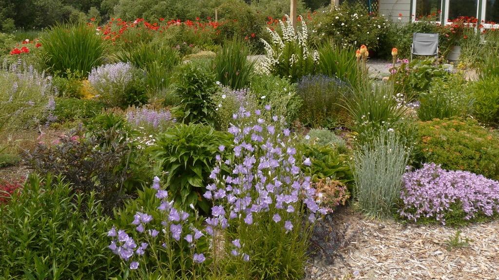 The late spring garden, a riotous mix of color.