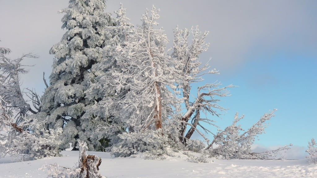 Partial clearing brings a patch of blue to an otherwise white world of snow and rime at the rim of Crater Lake.