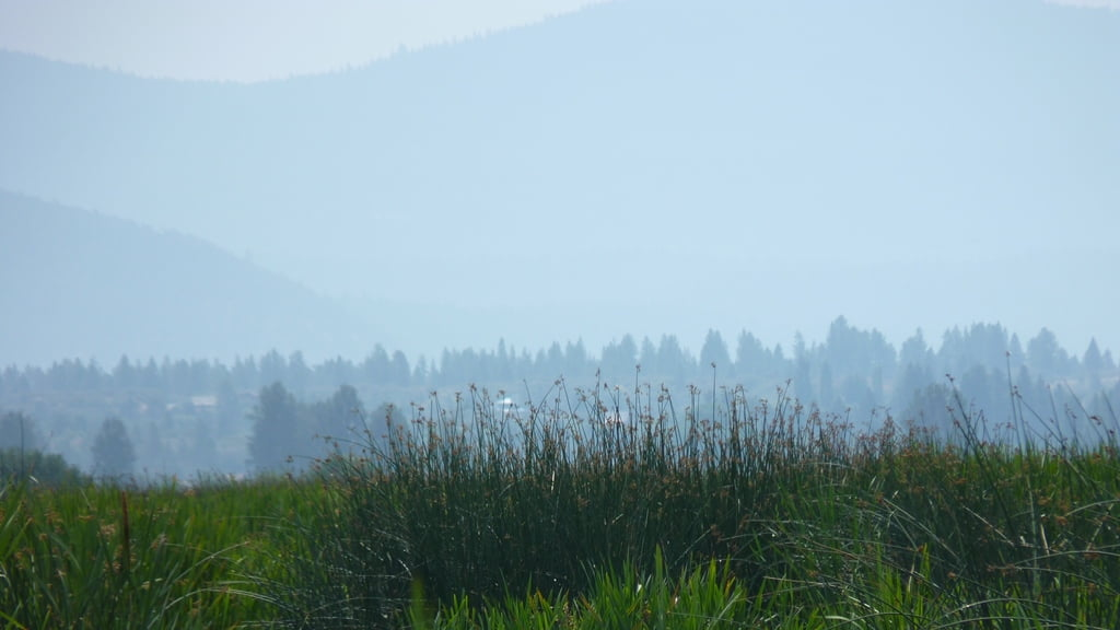 Looking out from the Wood River Wetlands over a wall of reeds and cattails, towards the layers of hills made hazy by the smoke of late summer wild fires.