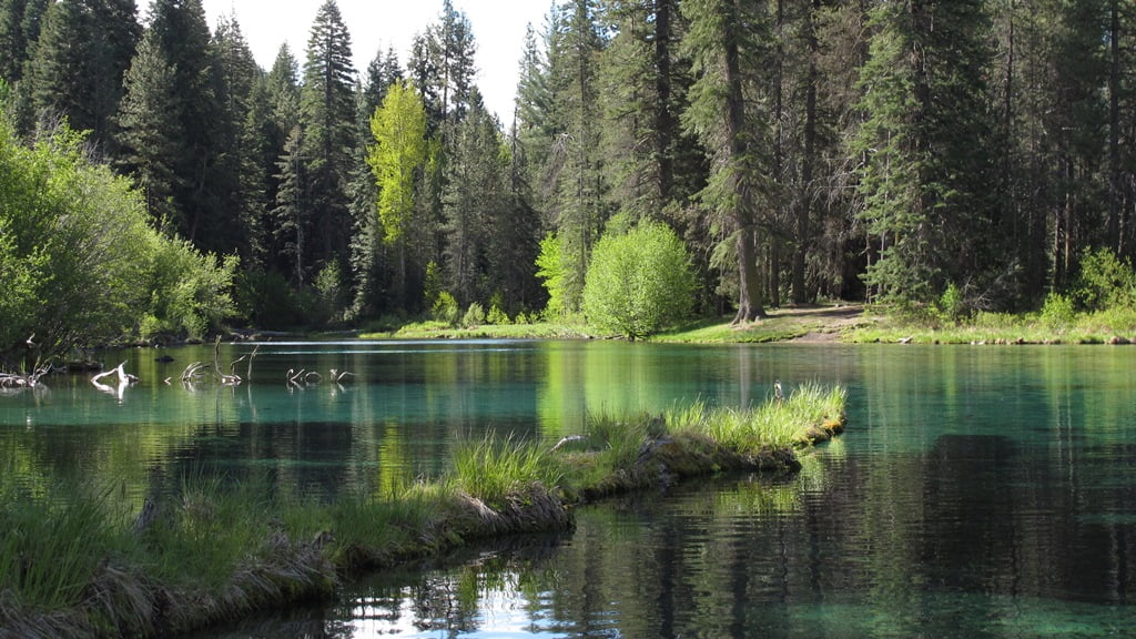 Spring green and clear, turquoise water at the headwaters of the Wood River in Jackson Kimble State Park.