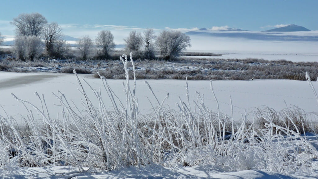 Frost on the grass, ice on the water, low-lying fog, sun shining brightly - a typical winter day in the Wood River Wetlands
