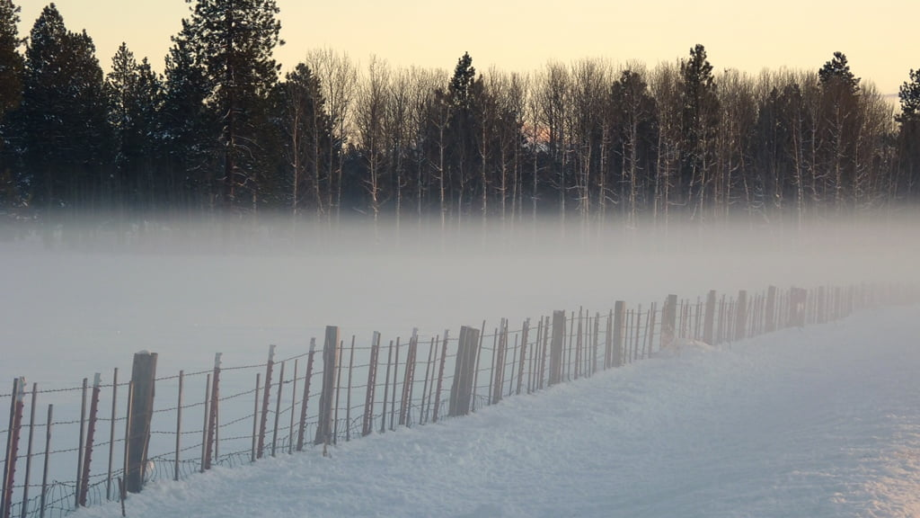A low, icy cold fog creeps in from the wetlands as the sun goes down along Modoc Point Rd.