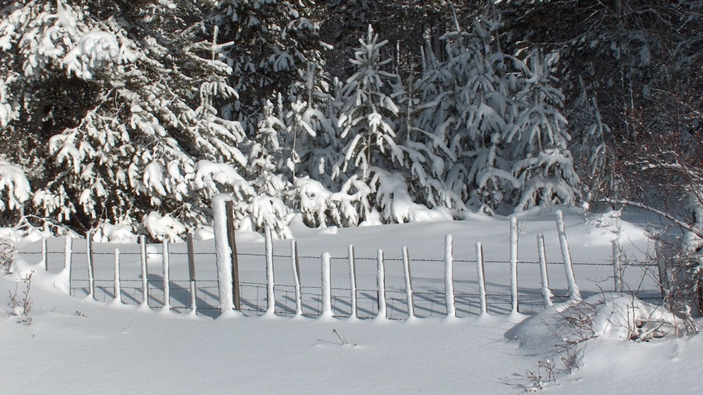 Wet snow, blown against a picket fence, is plastered on every post. Near Ft. Klamath